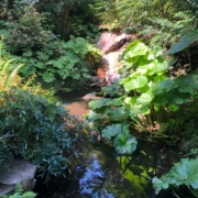 small stream bordered by lush greenery and dappled sunlight