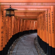 curving path with tall orange logs on either side with Japanese writing and a lantern hanging from the ceiling