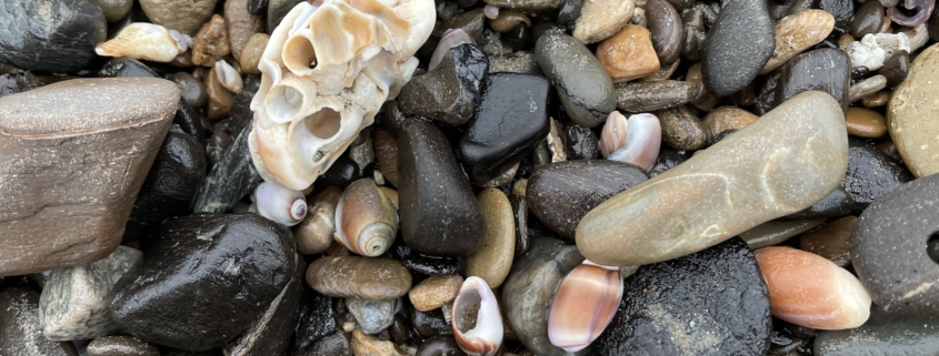close up image of rocks and shells jumbled together on the beach